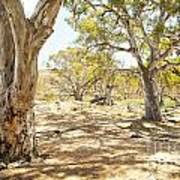 Australian Outback Oasis Art Print
