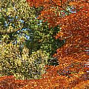 autumn colours in Bavaria Art Print