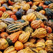 Autumn Gourds Art Print by Joann Vitali