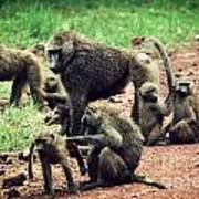 Baboons In African Bush Art Print