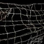 Barbed Wire Art Print by Bernard Jaubert