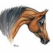 Bay Arabian Horse Watercolor Painting  Art Print