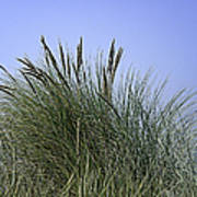 Beach Grass Art Print