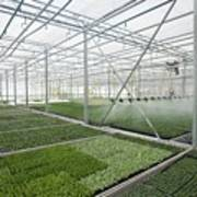 Bedding Plant Production Art Print