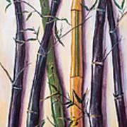 Black Bamboo Art Print