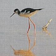 Black Neck Stilt Art Print
