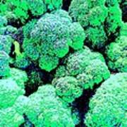 Broccolo Art Print