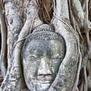 Buddha Head In Tree Art Print