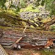 Cheakamus Rainforest Debris Art Print