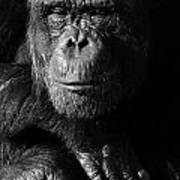 Chimpanzee Monochrome Portrait Art Print