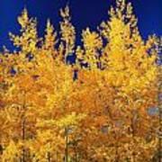 Colorado Autumn Art Print