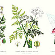 Common Poisonous Plants Art Print by English School