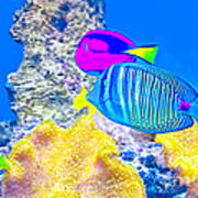 Coral Fishes Art Print