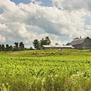 Corn Growing In Maine Farm Field Art Print