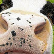 Cow No. 0651 Art Print