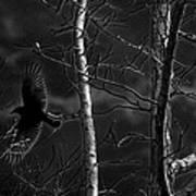 Crow Behind The Trees Art Print