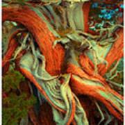 Deranged Redwood Art Print