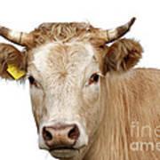 Detail Of Cow Head Art Print