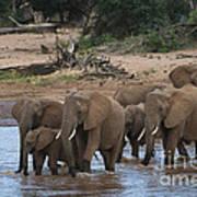 Elephants Crossing The River Art Print