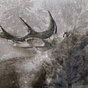 Elk In Winter Art Print