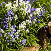 English Country Garden Art Print