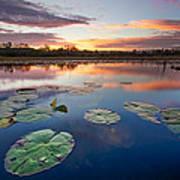Everglades At Sunset Art Print