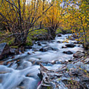 Fall At Big Pine Creek Art Print by Cat Connor