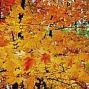 Fall Colors 2014-3 Art Print