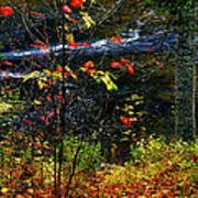 Fall Forest And River Art Print
