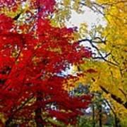 Fall Leaves Art Print by Ariane Moshayedi