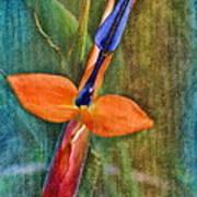 Floral Contentment Art Print
