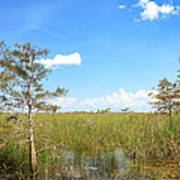 Florida Everglades Art Print