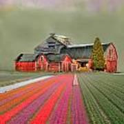 Flower Field Series Art Print