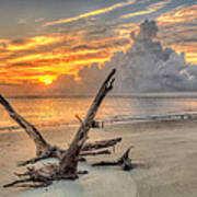 Folly Beach Driftwood Art Print