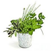 Fresh Herbs Print by Elena Elisseeva