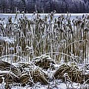 Frozen Reeds Art Print