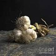Garlic Art Print by Bernard Jaubert
