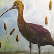 Glossy Ibis Art Print by Sharon Burger
