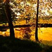 Golden Pond 3 Art Print