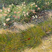 Grass And Butterflies Art Print
