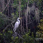 Lowcountry Marsh White Heron Art Print