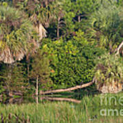 Green Cay Wetlands, Fl Art Print by Mark Newman