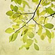 Green Foliage Series Art Print