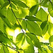 Green Spring Leaves Art Print