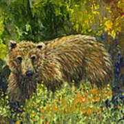 Grizzly Study 2 Art Print