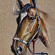 Horse Face - Drawing  Art Print