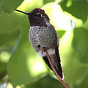 Hummingbird Hangout Art Print