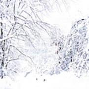 Hurricane Sandy Snow  Art Print