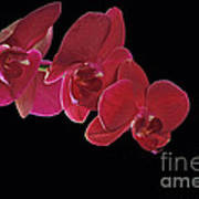 Inspired By Orchids Art Print