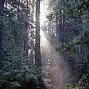 Jedediah Smith Redwoods State Park Redwoods National Park Del No Art Print